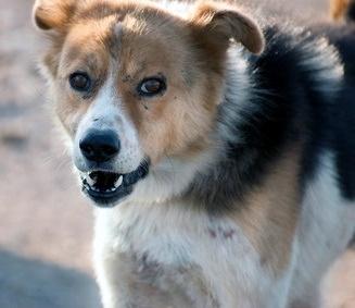 Dog bite injury compensation